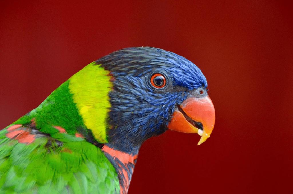 las-aves-exoticas-más-comunes