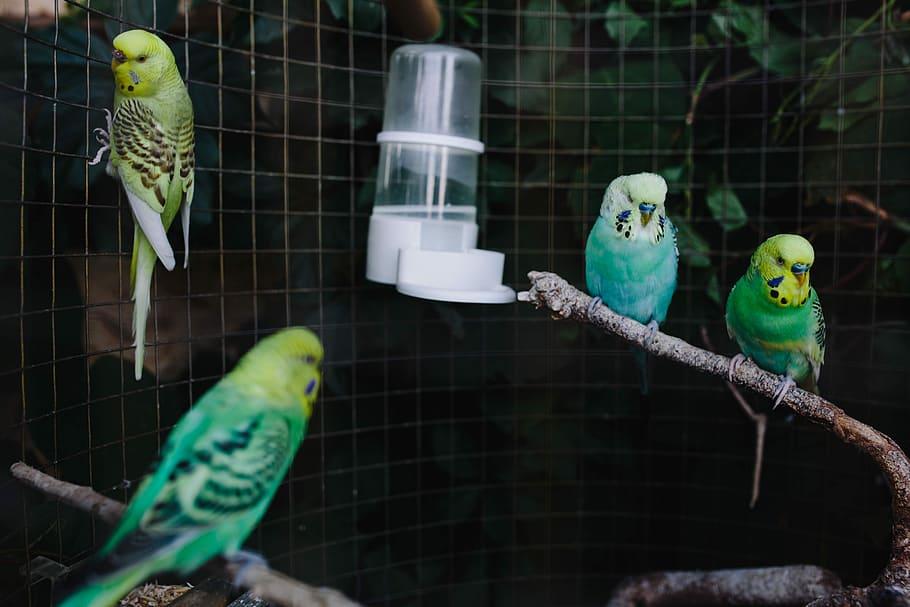 cómo elegir el pájaro adecuado si estas pensando tener uno de mascota