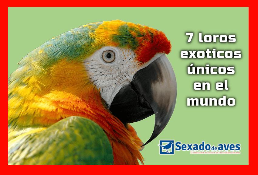 7 loros exoticos unicos