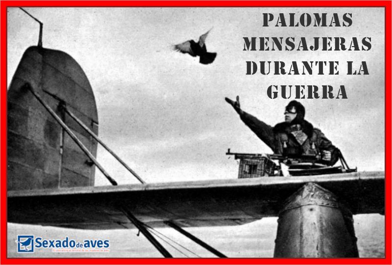 PALOMAS MENSAJERAS DURANTE GUERRA