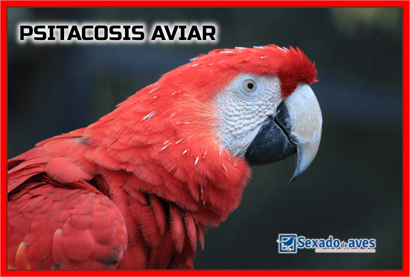 psitacosis aviar
