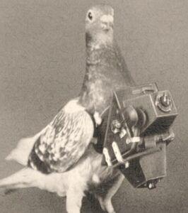 palomas mensajeras antigua