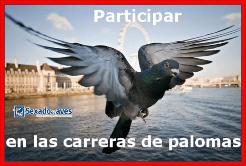 CARRERAS DE PALOMAS