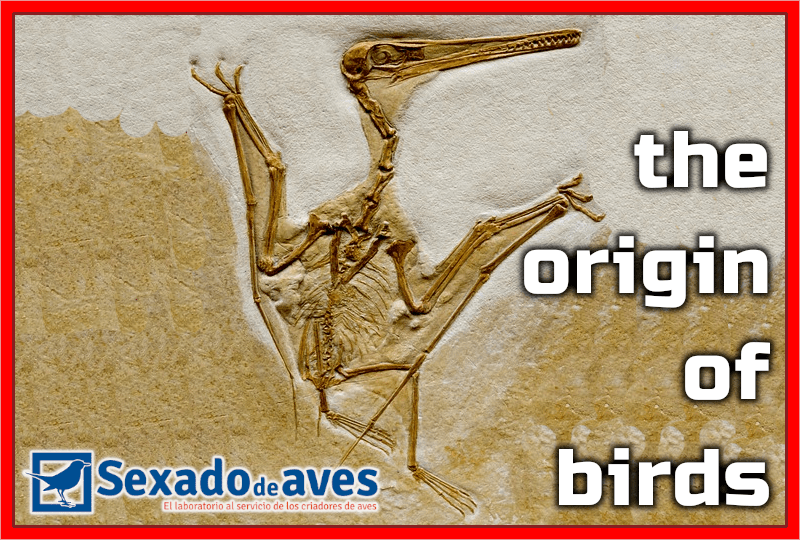 The Origin Of Birds