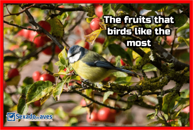The fruits that birds like the most