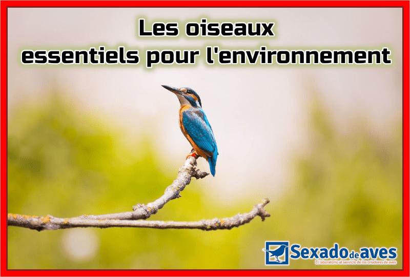 Les oiseaux : essentiels pour l'environnement