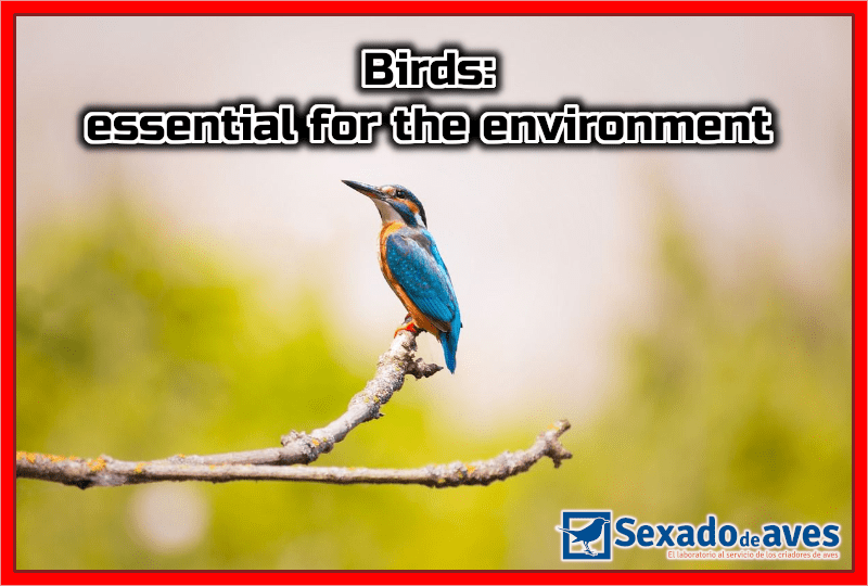 Birds: essential for the environment
